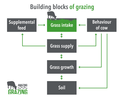Building blocks of grazing